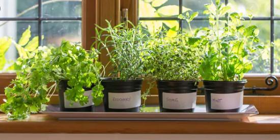 Start A Kitchen Garden